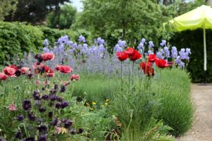 Frühjahr im Garten